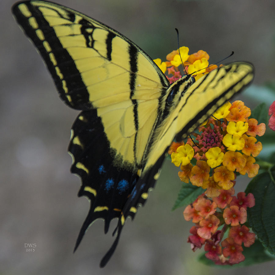 Yellow Butterfly by David W Schafer