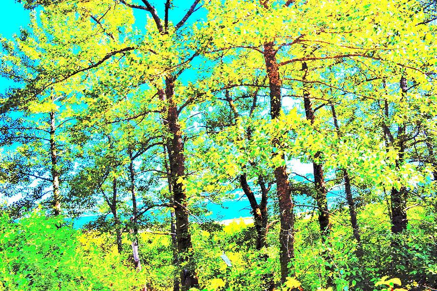 Yellow Cottonwood Photograph
