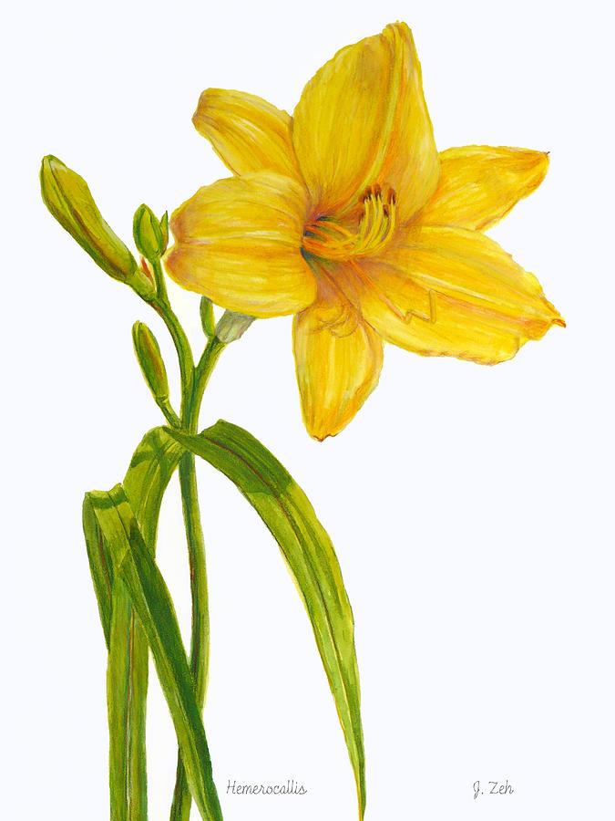 Yellow Daylily Hemerocallis Painting By Janet Zeh