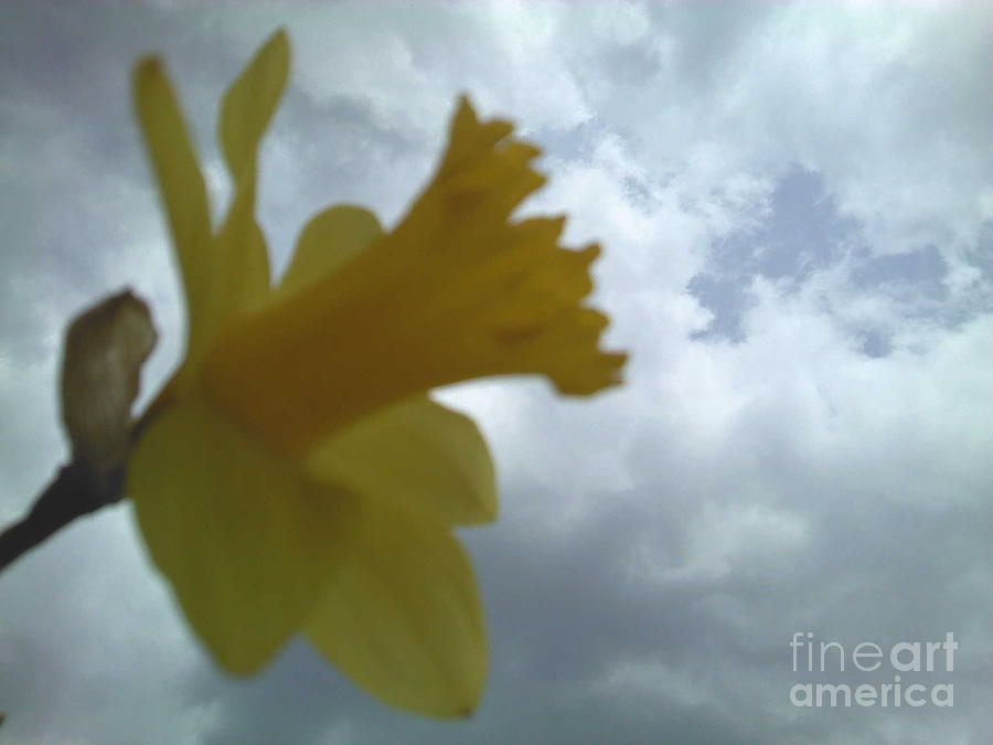 Yellow Photograph - Yellow Delight by Thommy McCorkle