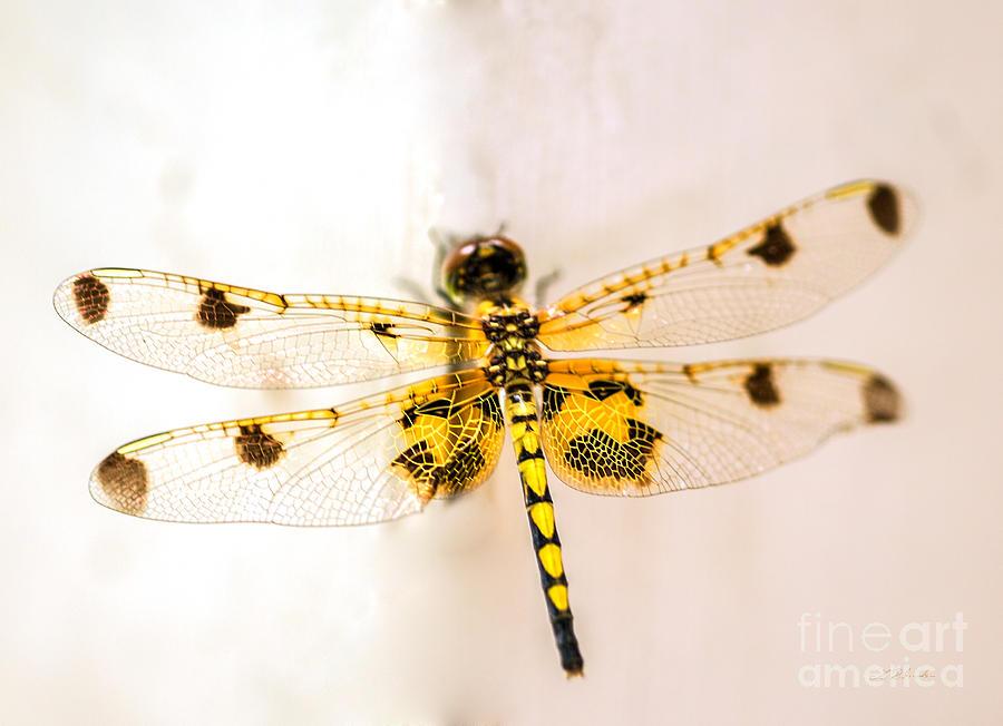 Yellow Dragonfly Pantala Flavescens Photograph