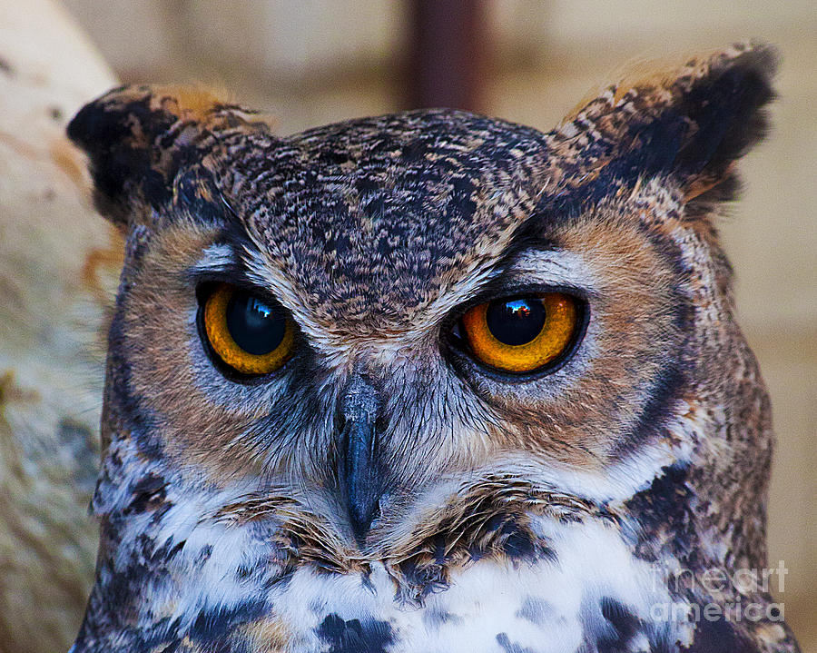 Yellow Eyed Wise Old Owl Photograph by Jerry Cowart
