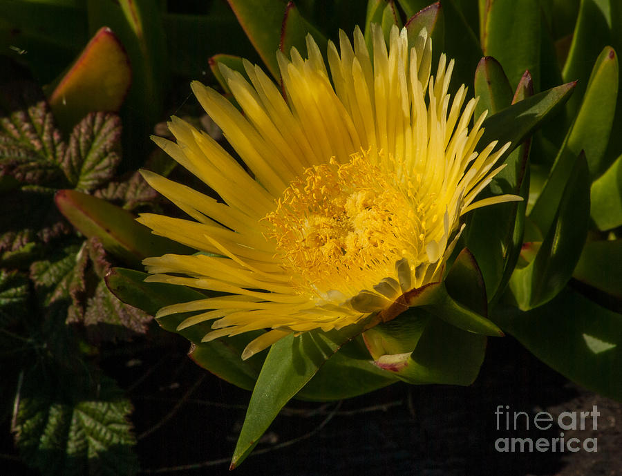 Flowers Photograph - Yellow Flower 1.7103 by Stephen Parker