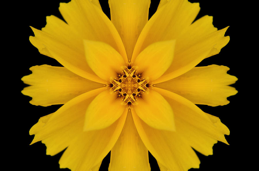 Flower Photograph - Yellow Flower Kaleidoscope Abstract by Don Johnson