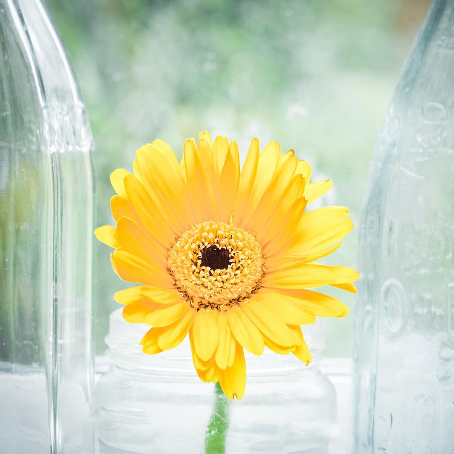 Alive Photograph - Yellow Flower by Tom Gowanlock