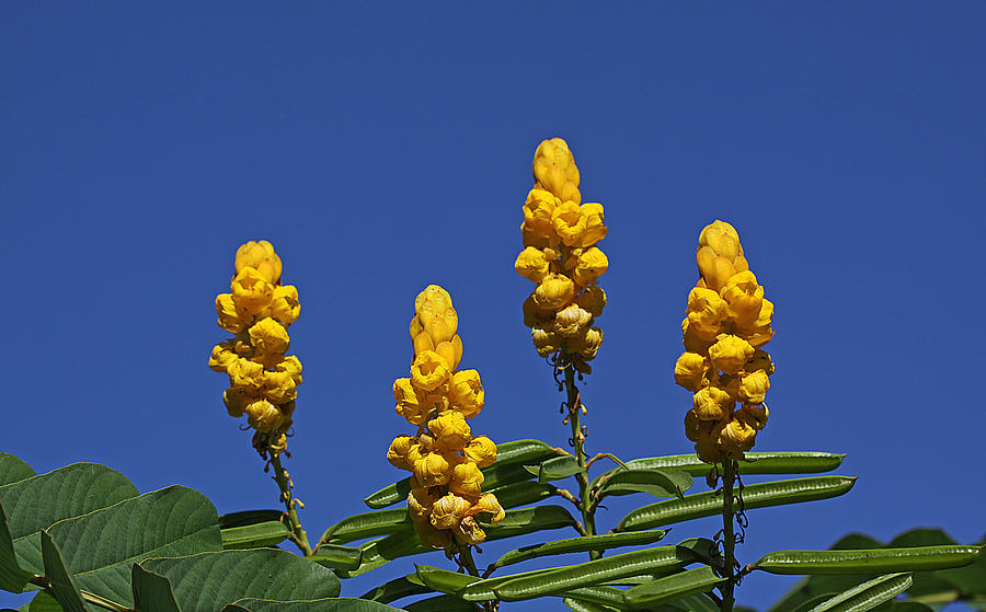 Yellow Flowers Against Blue Sky Photograph by Dart and Suze Humeston