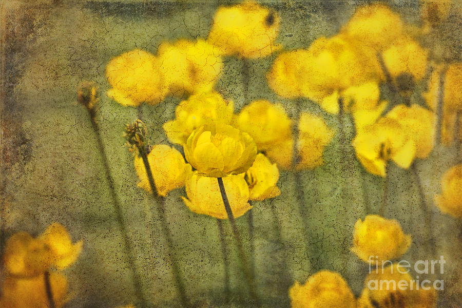 Flowers Photograph - Yellow Flowers With Texture by David Arment
