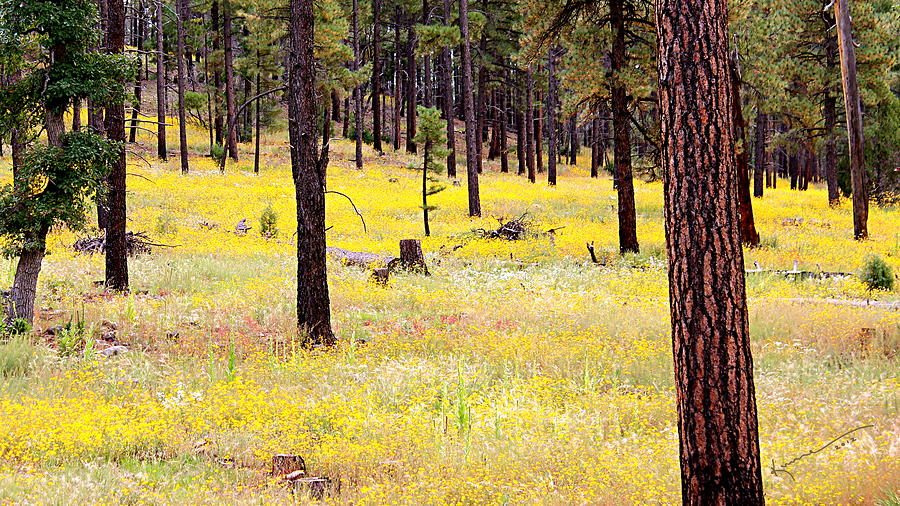 Yellow Flowers Photograph - Yellow Forest by Kume Bryant