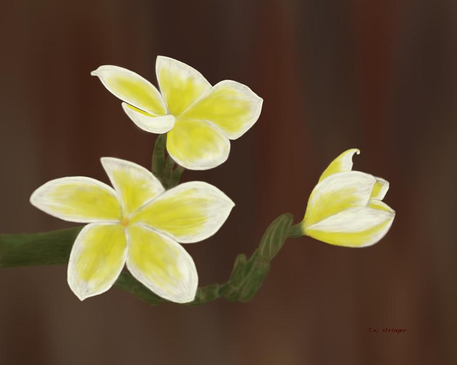 Frangipani Painting - Yellow Frangipani by Tim Stringer