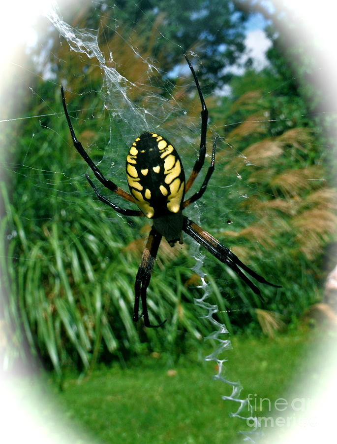 Spider Photograph - Yellow Garden Spider by Linda Walker
