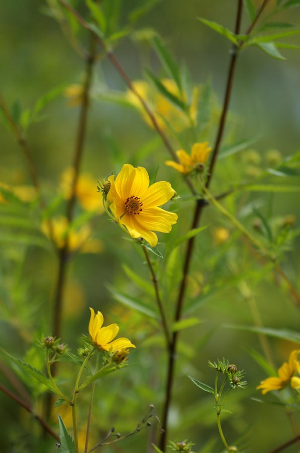 Back Yard Photograph - Yellow by Heidi Poulin