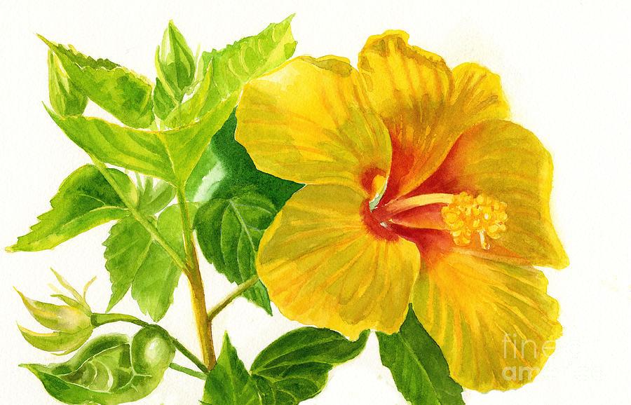 Yellow Hibiscus Flower Painting by Sharon Freeman
