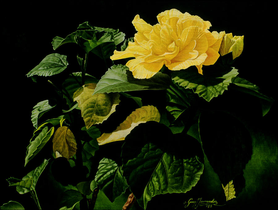 Floral Painting - Yellow Hibiscus by Gary  Hernandez