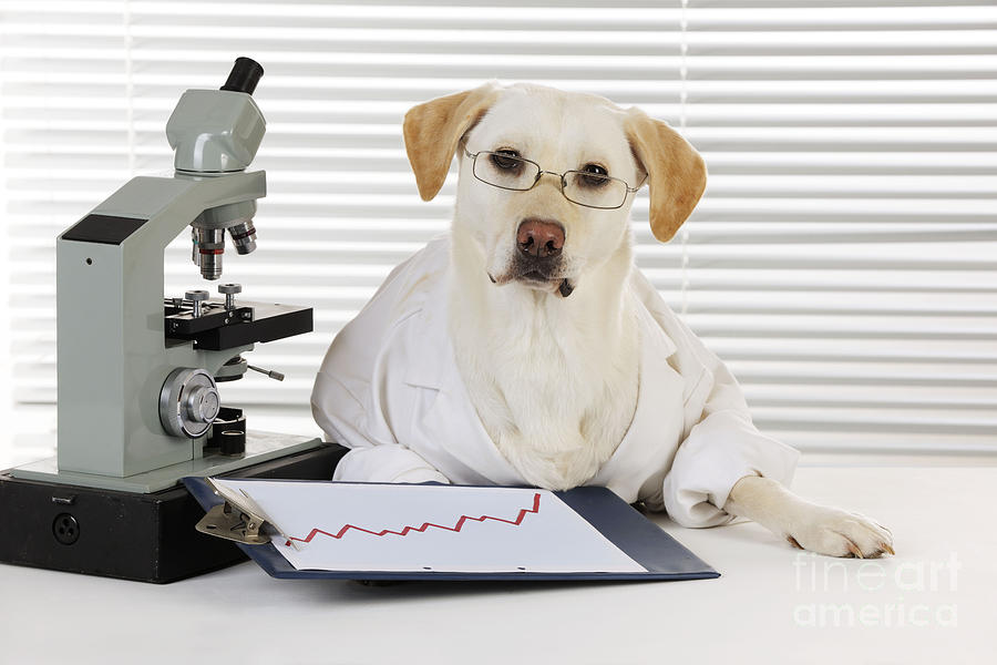 Yellow Lab In Lab Coat Photograph By John Daniels
