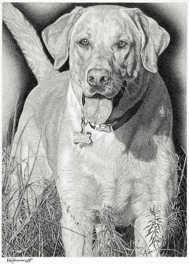 Yellow Lab Drawing - Yellow Lab In The Field by Rob Christensen