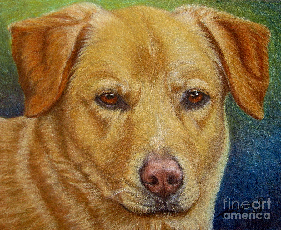 Yellow Lab - Pastel by Beverly Fuqua