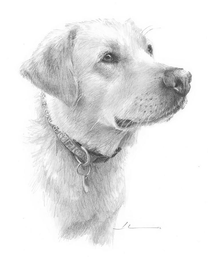 Yellow Labrador Pencil Portrait Drawing by Mike Theuer