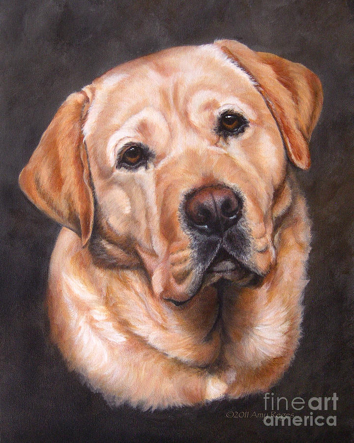Yellow Lab Prints Painting - Yellow Labrador Portrait - Dark Yellow Dog by Amy Reges