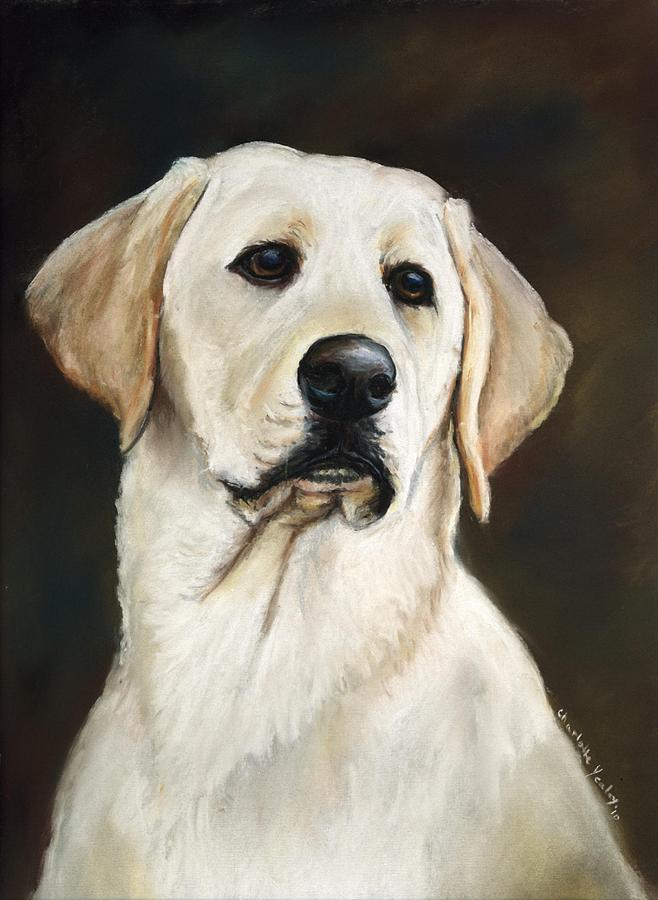 Yellow Labrador Retriever Painting By Charlotte Yealey