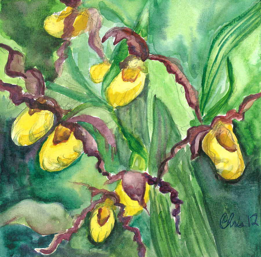Watercolor Painting - Yellow Ladies Slippers by Christina Plichta