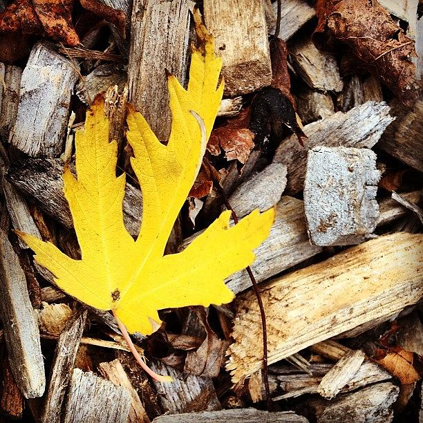 Leaf Photograph - Yellow Leaf by Christy Beckwith