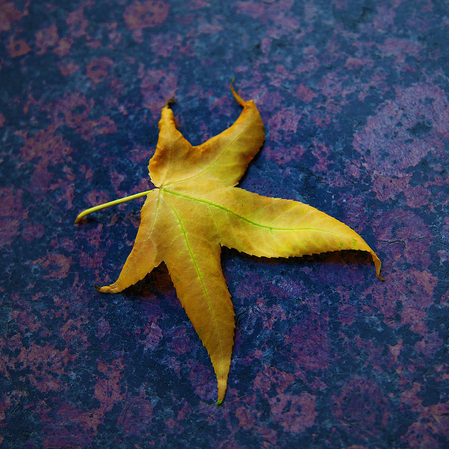 Yellow Leaf On Marble by David Davies