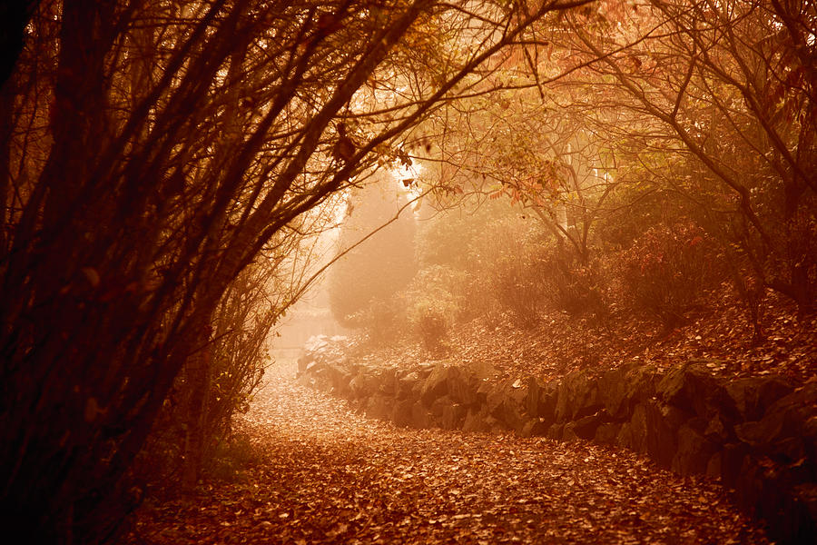 Path Photograph - Yellow Leaf Road by Monte Arnold
