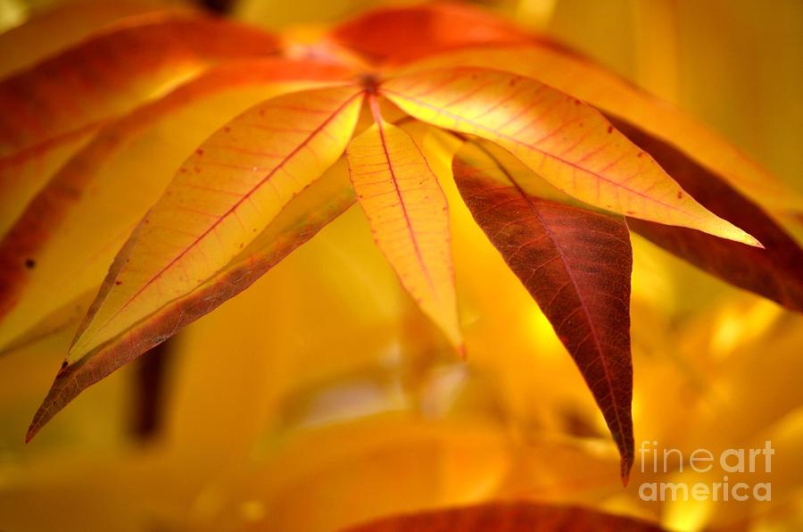 Red Photograph - Yellow Leaves At Dawn by Deb Halloran