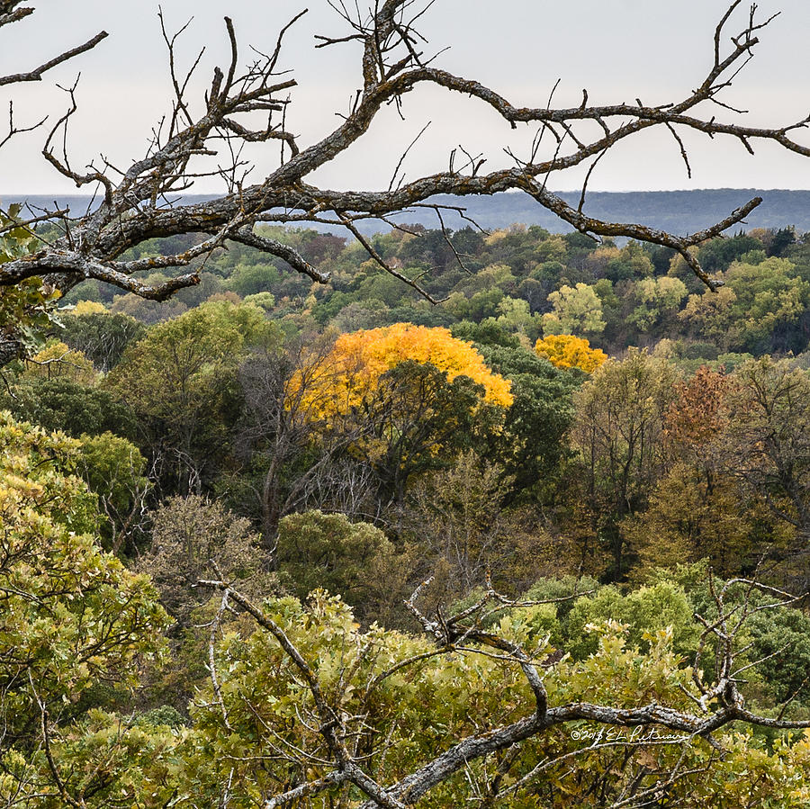 Fall Photograph - Yellow Leaves by Edward Peterson