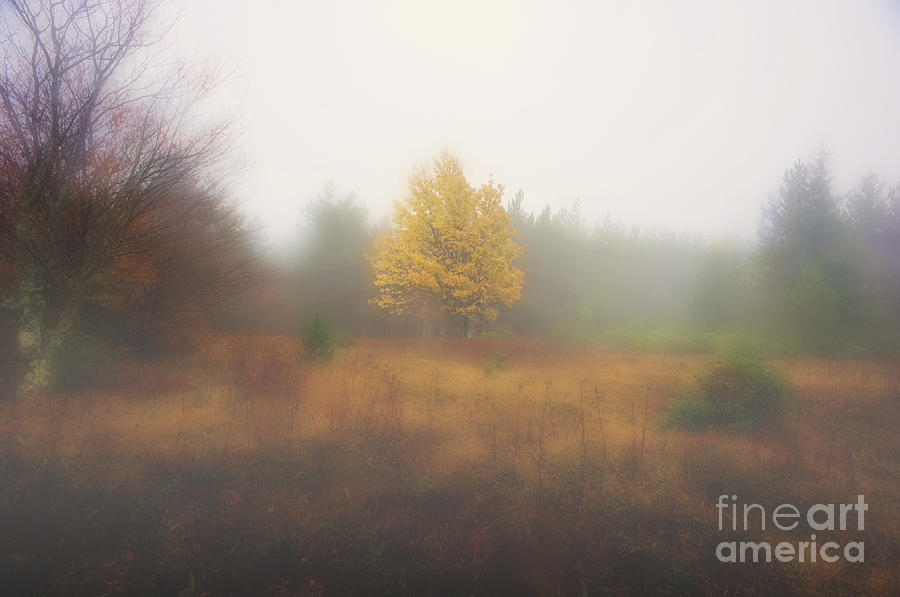 Fall Photograph - Yellow Leaves Of Tree In Fog At Dolly Sods by Dan Friend