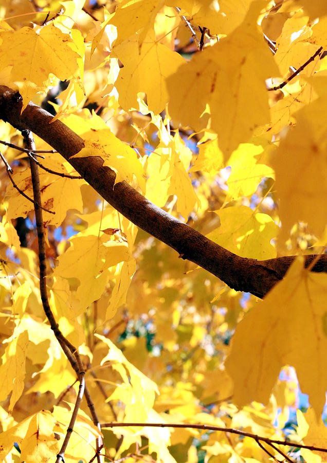 Autumn Photograph - Yellow Leaves by Valentino Visentini