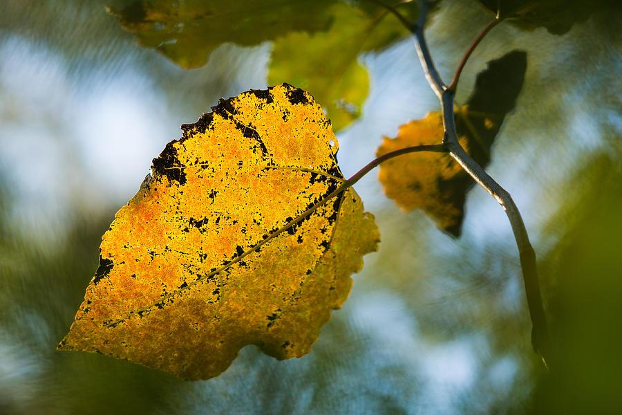 Abstract Photograph - Yellow Light - Featured 3 by Alexander Senin