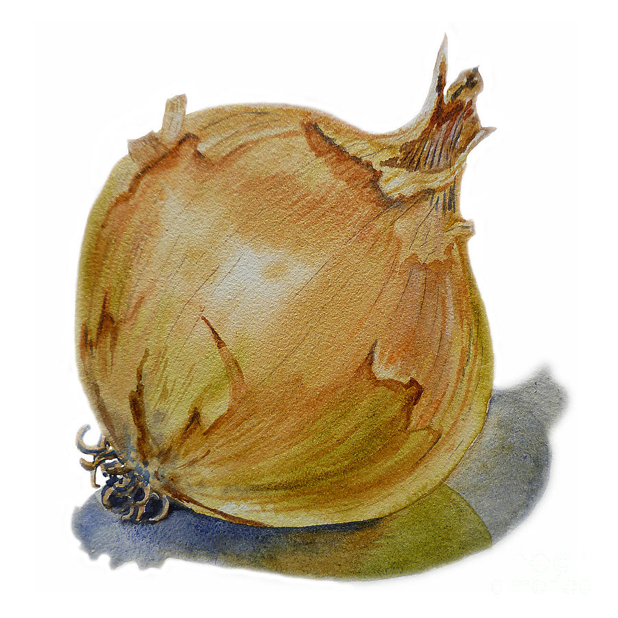 Yellow Onion Painting - Yellow Onion by Irina Sztukowski