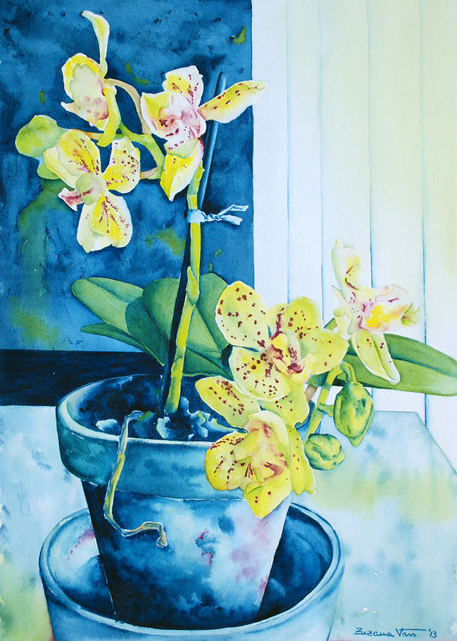 Watercolor Painting - Yellow Orchid by Zuzana Vass