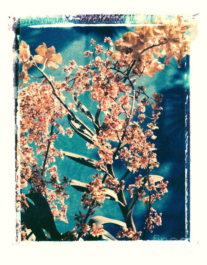 Polaroid Transfer Photograph - Yellow Orchids by Deborah Gray Mitchell
