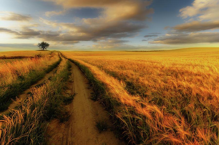 Poland Photograph - Yellow by Piotr Krol (bax)