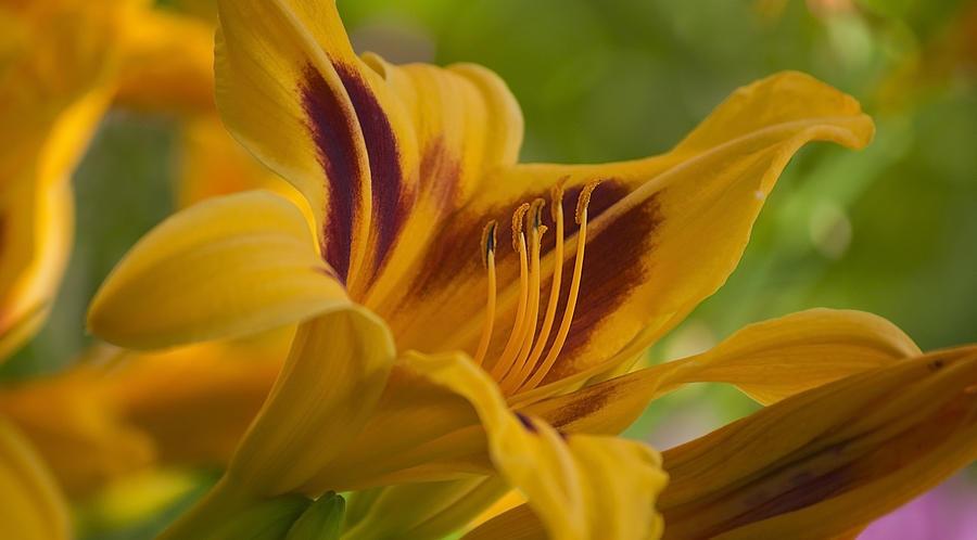 Matt Blum Photograph - Yellow Rising by Matthew Blum