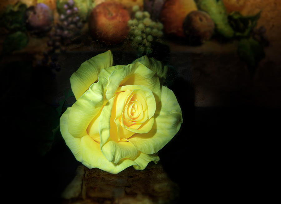 Rose Photograph - Yellow Rose by Cecil Fuselier