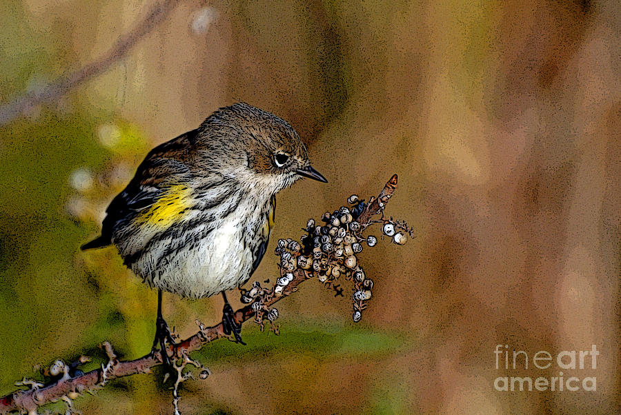 Bird Photograph - Yellow Rumped Warbler#3 by Michael Rucci