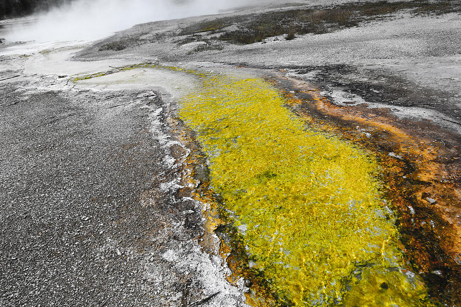 Yellow Stone National Park Photograph - Yellow Rush by Ritsuko Wakamatsu