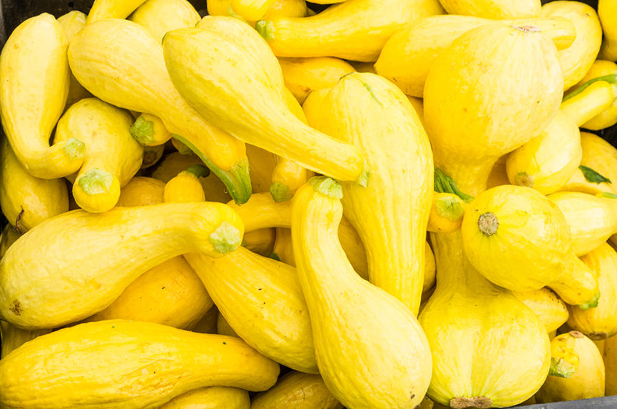 Agriculture Photograph - Yellow Squash At The Market by John Trax