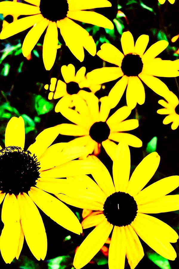 Flower Photograph - Yellow Stroll by Paul Tully