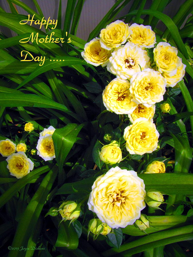 Yellow Photograph - Yellow Tea Rose  Happy Mothers Day by Joyce Dickens