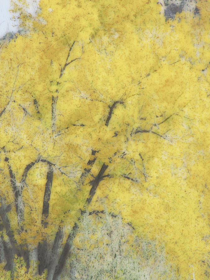 Tree Digital Art - Yellow Trees by Ann Powell