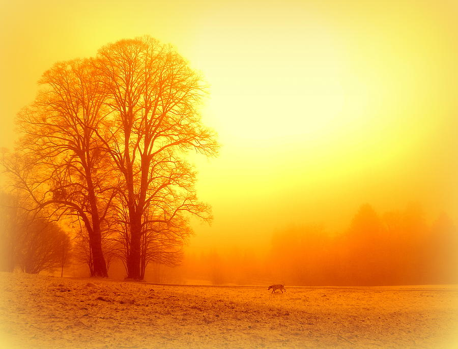 Dog Photograph - Yellow Winter Sunrise by The Creative Minds Art and Photography