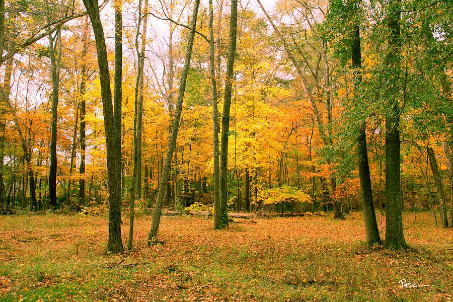 Yellow Wood 3 Photograph