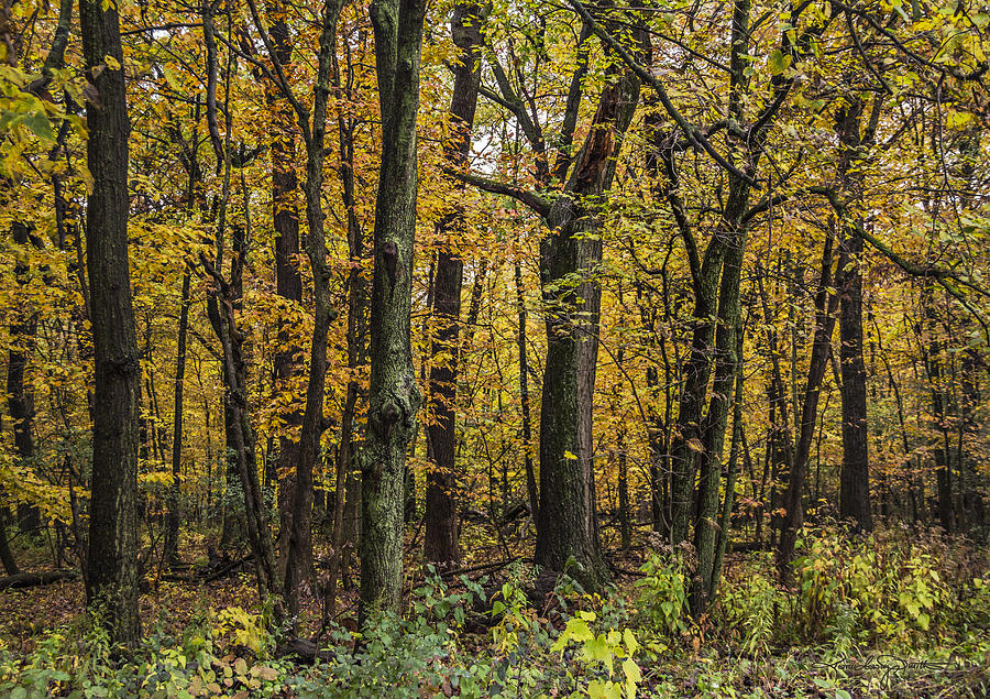 Fall Color Photograph - Yellow Woods On A Rainy Day by Karen Casey-Smith