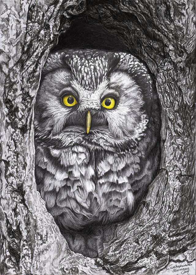 Owl Drawing - Yelloweyes - The Owl Edition by Iren Faerevaag