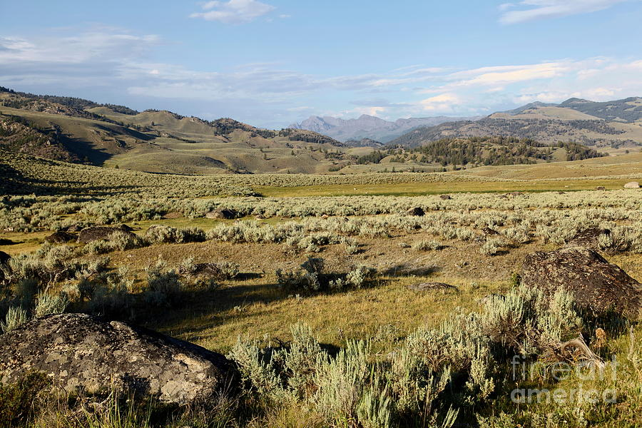 Yellowstone Photograph - Yellowstone Landscape by Sophie Vigneault