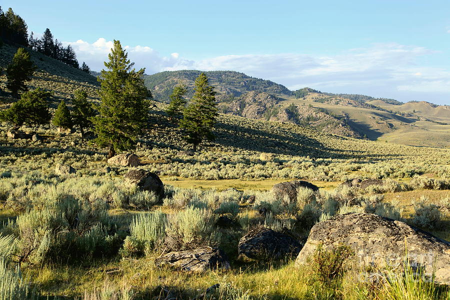 Yellowstone Photograph - Yellowstone Scenery by Sophie Vigneault